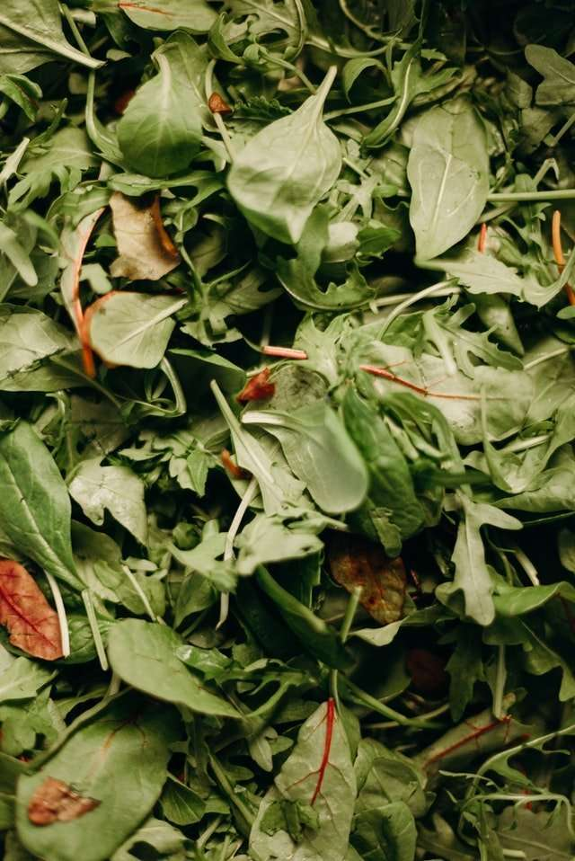 composting worms love spinach