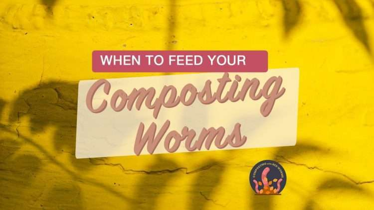 How often should I feed my worms?