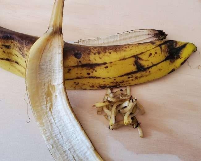 Cut up banana peels for vermicompost food