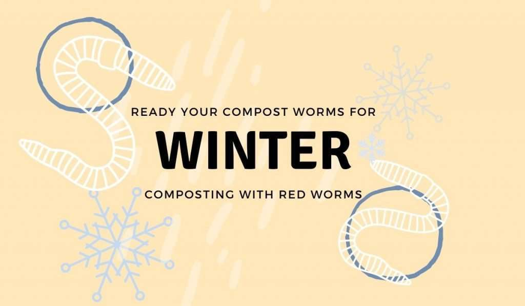 get compost worms ready for winter