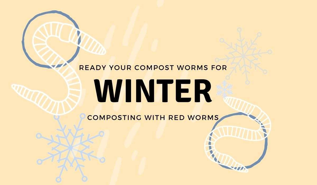 Getting your compost worms ready for winter